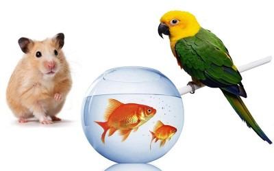 картинки с попугаем и хомячком специальным приспособлением можно